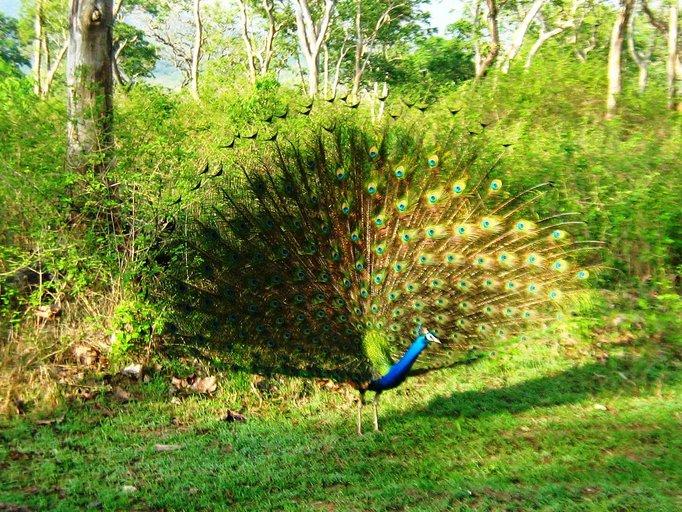 National Symbols Animal Birdtreeflowerfruit Emblem Of India